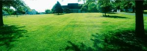Lawn Care Project