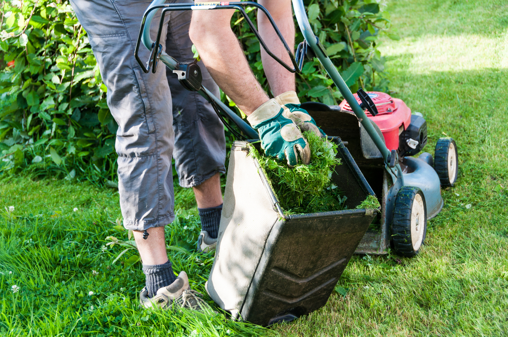 What Is Full Service Lawn Care? What To Expect From Your Service Provider