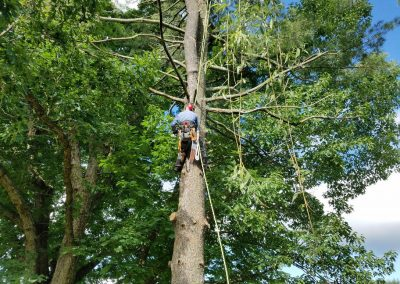 Front Royal Tree Removal