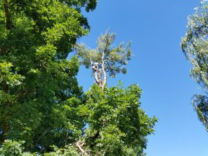 VA tree service and tree removal service