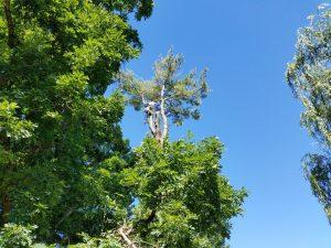 tree service and tree removal company